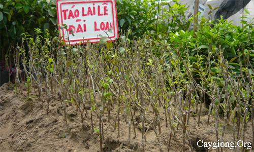 Thú nuôi, cây cảnh: Cung cấp các loại giống cây trồng, giống cây ăn quả Giong-tao-le-lai
