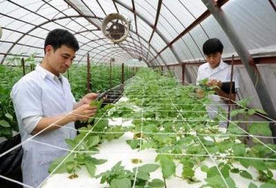 Cơ chế mới giúp tăng năng suất cây trồng