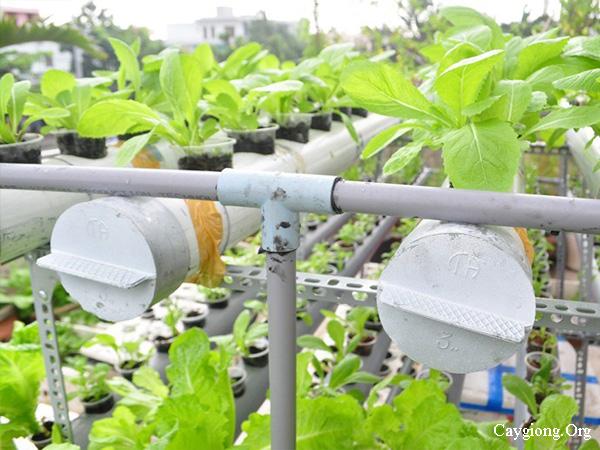 Mô hình trồng rau ăn lá bằng phương pháp thủy canh hồi lưu